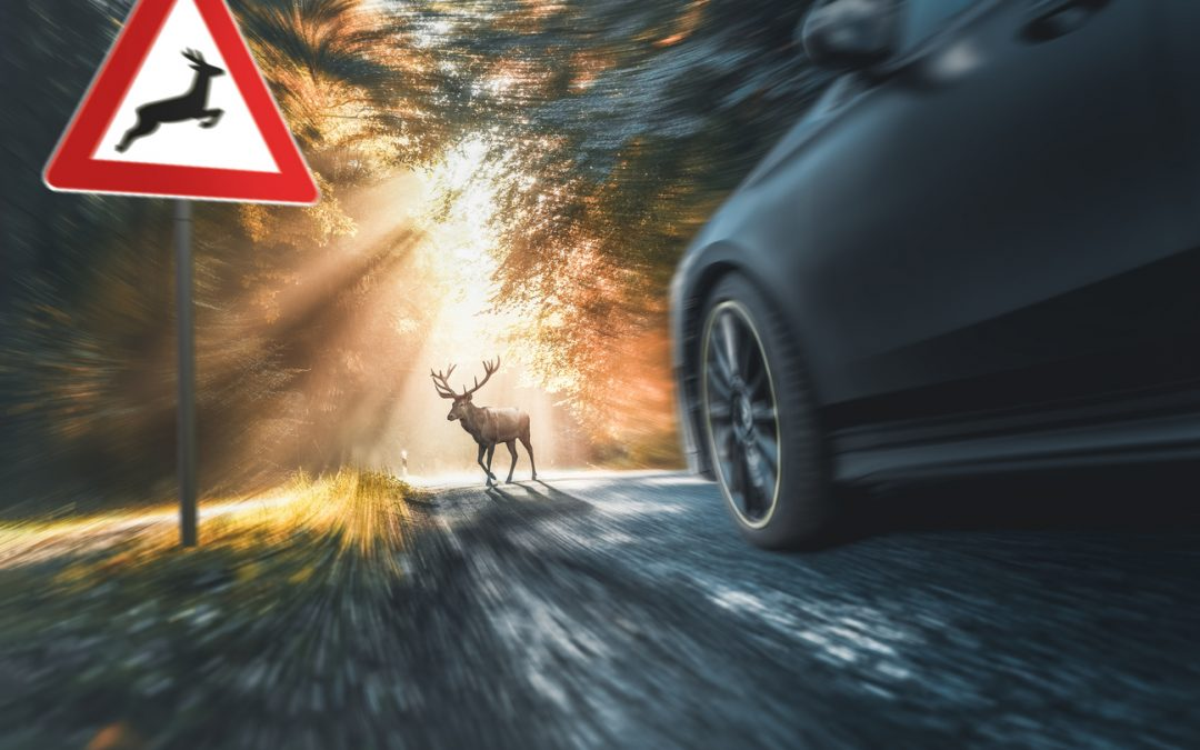 Collisions With Animals – Who is at Fault?